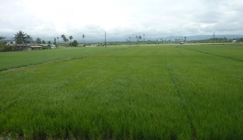 San Carlos-Dumaguete (110)