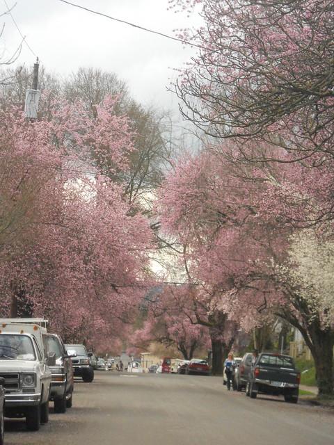 spring2011 067