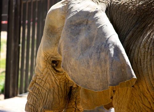 elefante (Zoo de Barcelona)