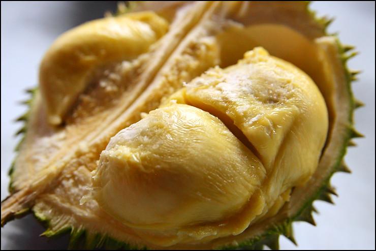xo-durian-2
