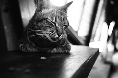 TAIWAN CAT 2016 (uicee) Tags: olympus mjuii tmax 400 to 1600 mju 35mm f28 cats cat streetcat blackandwhite monochrome animal pet depth field