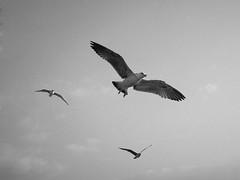 3Seagulls