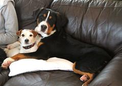 Cooper & Peanut