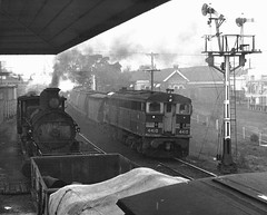 Goulburn North, 1970 (sth475) Tags: railroad blackandwhite bw home monochrome train vintage print spring diesel bracket engine railway loco australia historic steam nsw scanned locomotive 1970 favourite signal worldseries goodwin alco goulburn mainsouth southerntablelands 4410 5132 lowerquadrant beyerpeacock nswgr nswr d50class 44class no2end standardgoods dl500b