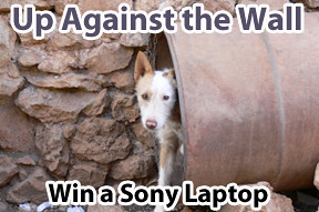 Up Against The Wall, Sony Laptop, wall systems,