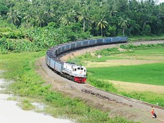 Coal Train (KA BaBaREndek) curving @ Jambu (chris railway) Tags: railroad green train indonesia tren photography paddy eisenbahn railway zug patas locomotive padi coal stasiun curve ricefield jambu ka baru hijau sawah kurs ferrocarril ferrovia treni merak spoorweg   chemindefer pocig   railfans rangkasbitung banten ekonomi keretaapi batubara lebak  cc201 tikungan  cc201104  bantenekspres oto cc20141 cc201128 cc201105 babarendek banteks ferrovira cc20182 cc201144 fotografiaferrovira