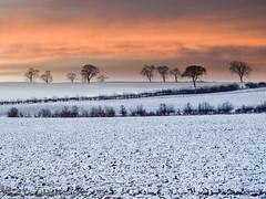 Snow on the Fields of Nottinghamshire (DaveKav) Tags: uk trees england snow sunrise dawn olympus fields orangesky nottinghamshire e510 superaplus aplusphoto platinumheartawards herowinner