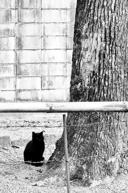 Today's Cat@2011-02-06