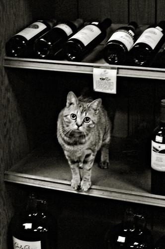 wine store cat
