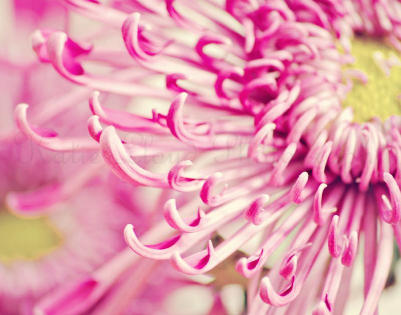Pink-flowers---11x14-wm