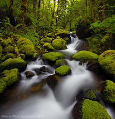 Oregon Moss (Darren White Photography) Tags: longexposure trees nature oregon creek forest landscape waterfall moss hiking scenic pacificnorthwest naturalbeauty columbiagorge darrenwhite darrenwhitephotography landscapesofthepacificnorthwest oregonstockphotography