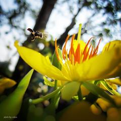 bokeh and backlighting #4 (e.nhan) Tags: flowers light flower art closeup spring dof bokeh bee backlighting enhan