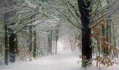 Jour de tempête. Stormy day (Amiela40) Tags: neige exploration blanc plaisir sentier forêt bois brume expédition tourbillon tempêtedeneige impressedbeauty platinumheartaward bestcapturesaoi elitegalleryaoi