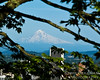 Mt Hood framed by the Garden
