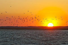 Seagull Sunset (Warriorwriter) Tags: ocean sunset sun beach nature weather birds night virginia nationalpark maryland atlantic clear assateagueisland assateague nationalwildliferefuge delmarva delmarvapeninsula