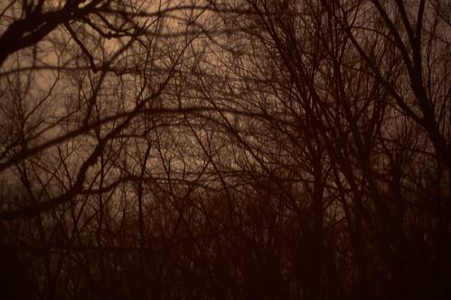 trees-(_DSC8858)
