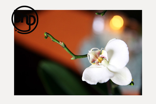 6 . orchid .