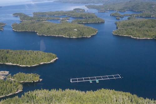 Broughton Archipelago salmon farm