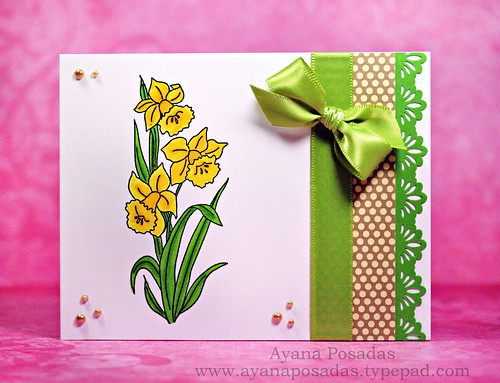 Daffodil Flowers (1)