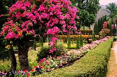 IMG_31h__0011 Resort Gardens. (ol'pete) Tags: film gardens parks resort scanned   5photosaday   earthasia horticlture totallythailand doilopete