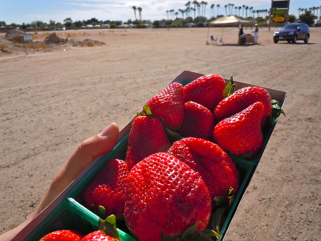 Strawberries in Yuma, AZ