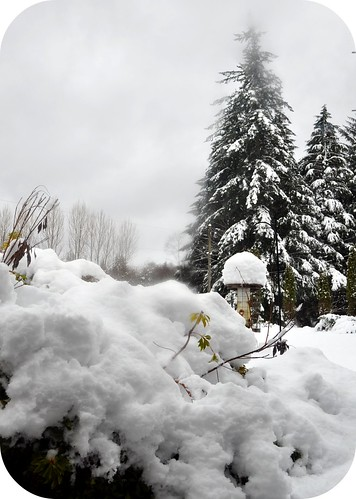 Holy snow!!!