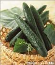 小黃瓜(植物原液)-20100906171547_m