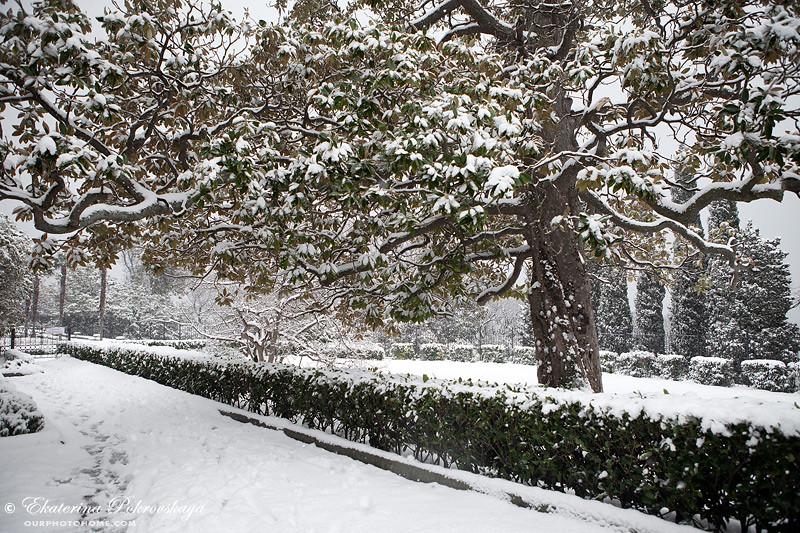 Voroncov_palace__winter_18