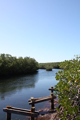 IMG_2172 (we will all be ghosts) Tags: florida mangrove keylargo stateparks johnpennekamp