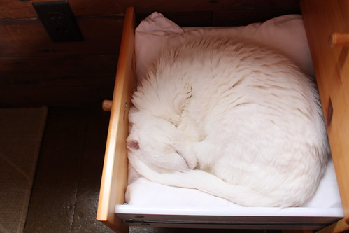 The Cat Drawer: Mr. Bell curled up asleep in a drawer.