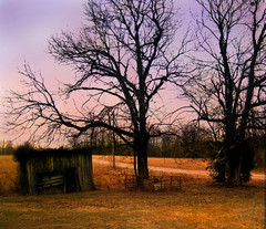 Lovers' Walk (faith goble) Tags: road old autumn trees winter sunset sky cold art fall abandoned home nature field grass leaves silhouette rural evening rust gate artist poem glow photographer dusk decay farm kentucky ky bare branches faith country stock shed ruin nostalgia dirt age cedar memory poet writer lonely past telephonepole luminous deserted fallow bowlinggreen gravel caseycounty archaic outbuilding goble firsthand spaw 40acresandamule broomsedge faithgoble gographix faithgobleart thisisky