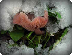 voce del verbo resistere (Liberty Place) Tags: snow nature mushroom natura erba neve picnik fungo naturalmente naturesfinest vignettatura ringexcellence flickrstruereflection1 flickrstruereflection2 flickrstruereflection3