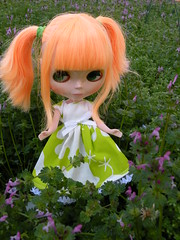 Willow Plawing in the field of flowers