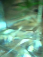green aquarium --- Water Mirror - Wasser Spiegel --- Aktion: Glas Würfel Wasser ~ Glas Cube Water (hedbavny) Tags: vienna wien autumn winter summer selfportrait plant reflection art water glass self ego aquarium austria mirror sketch österreich spring wasser underwater sommer spiegel kunst diary herbst jahreszeit pflanze autoretrato sketchbook september note cube reflexion spiegelung tagebuch glas würfel glaswürfel aktion frühling unterwasser undine skizze notiz melancholie wasserpflanze wasserspiegel skizzenbuch onirism glasscube aktionismus reflektionspiegelung onirismus hedbavny ingridhedbavny