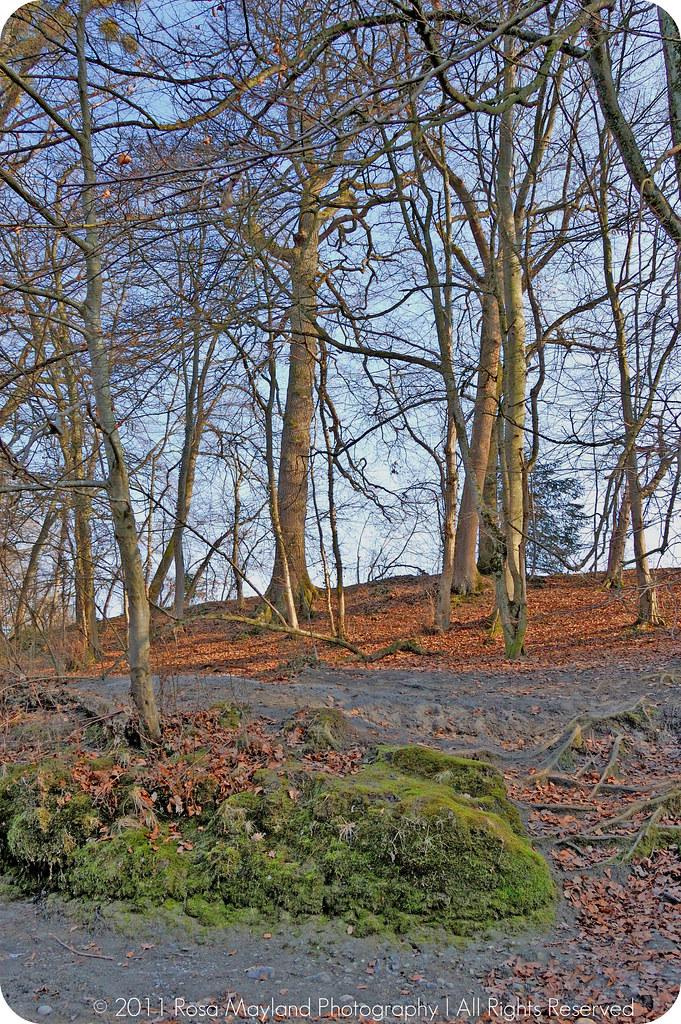 Spring Arve Trees 1.2 bis