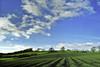 Green Fields (Noro8) Tags: green nature kent day fields gmt superstarthebest mygearandme nikond3100 noro8 pwpartlycloudy