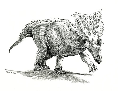 chasmosaurus belli