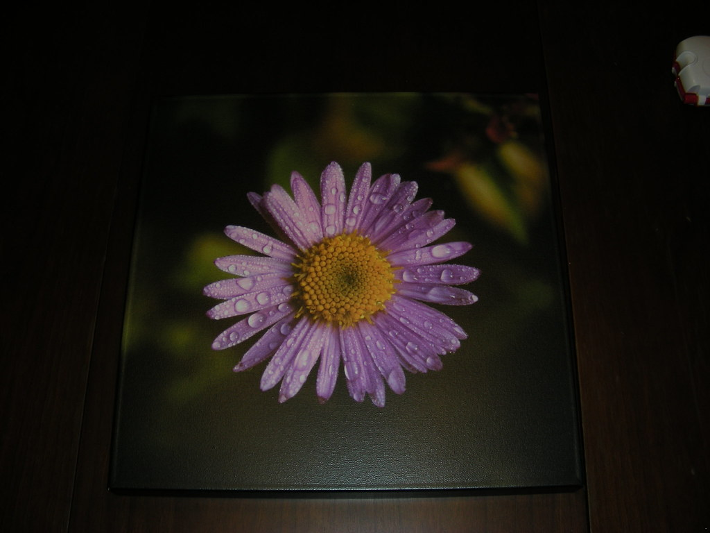 Dewy Flower Print