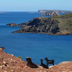 A Goat's View of rocky coastline of Menorca (Bn) Tags: blue red sea moon holiday beach water animal forest swimming swim landscape geotagged island back high dangerous spain sand woods topf50 mediterranean crystal cove dunes dune rocky peaceful goat lagoon calm cliffs unesco formation clear virgin caves pines edge limestone vegetation coastline remote dare calas bays desolate climate isolated menorca laid secluded minorca reddish unspoiled balearic maan watercrystal hillsides naturists 50faves wildgoat nuturism caladelpilar geomenorca coastlinenatural environmentsunescobiosphere reservemediterranean beachspainbalearicsmenorcaturquoise blueminorcabalearic islandsrocky geo:lon=3973548 geo:lat=40052499