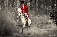 Splash ... (Alex Verweij) Tags: horse water canon running 7d 1022mm whitehorse amsterdamsebos paard ruiter slipjacht alexverweij mygearandme mygearandmepremium mygearandmebronze 12032011 soestdijksejachtvereniging kerrybeagles