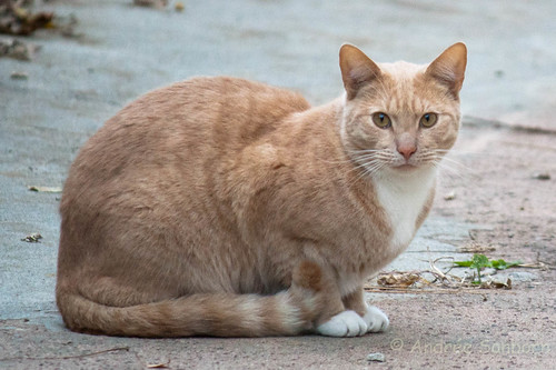 Feral Cats  -12.jpg