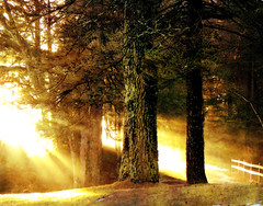.....light my path..... (xandram) Tags: light sun forest photoshop fence textures lichen daybreak selectbestexcellence sbfmasterpiece