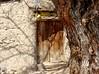 """جوانه (Ebrahim Baraz) Tags: khorasan طرقبه خراسان baraz براز ebrahimbaraz ایرججنتیعطایی """"flickrtravelaward"""""""