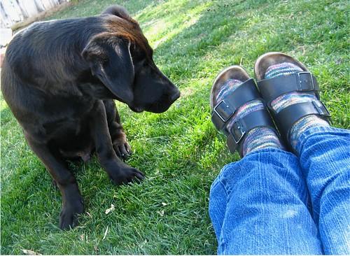 Bob & Socks