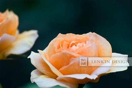 Lenkin-01.26.11-014web