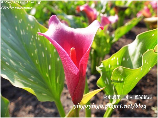 台中后里_中社光觀花市20110130_R0017621