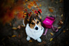 wintering (moaan) Tags: leica winter dog cold digital 50mm corgi dof bokeh f10 utata noctilux withered welshcorgi chill m9 remainder coldness 2011 pochiko leicanoctilux50mmf10 coldairmass leicam9 gettyimagesjapanq1 gettyimagesjapanq2