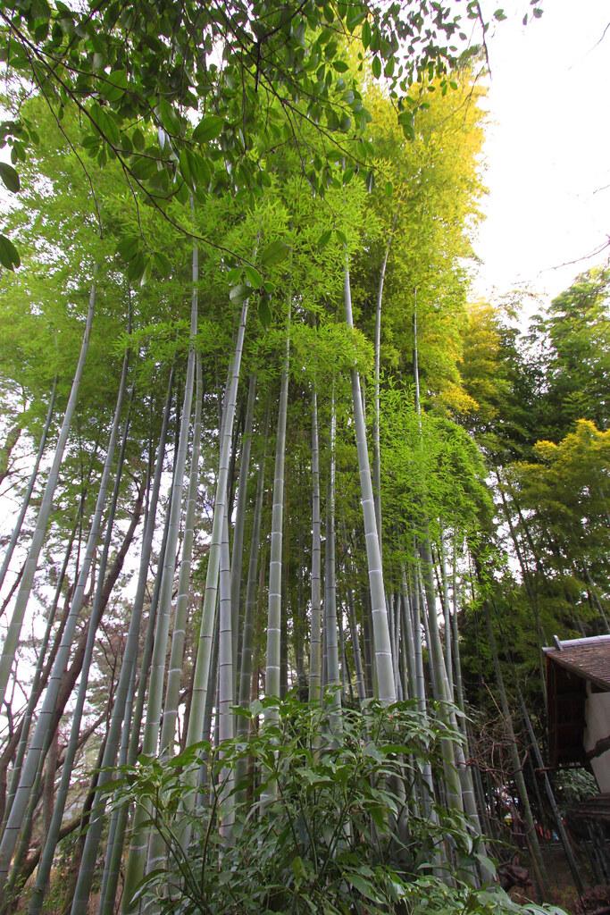 Sankei-en (8)