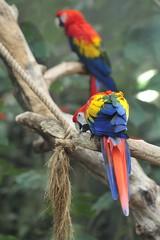 he's my nephew (andre.m(eye)r.vitali) Tags: animals zoo parrot dieren rhenen dierentuin ouwehandsdierenpark papegaai papagai d700