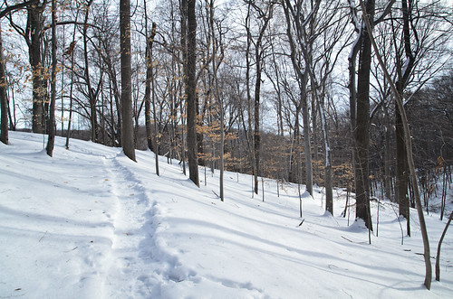 Elmdale Trail, Winter [1/3]